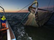 Fangfahrt auf dem Krabbenkutter