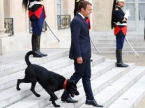 French President Emmanuel Macron and his dog, a labrador crossed griffon named Nemo, leave at the Elysee Palace to greet a guest in Paris, France