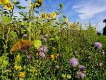 Feldrandbepflanzungen