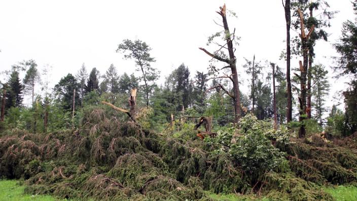 Tornado zertrümmert Baumriesen; Sturmschäden bei Aschering