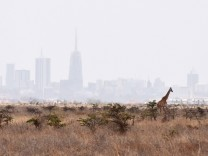 160923 NAIROBI Sept 23 2016 A giraffe walks inside the Nairobi National Park in Nairobi Ken