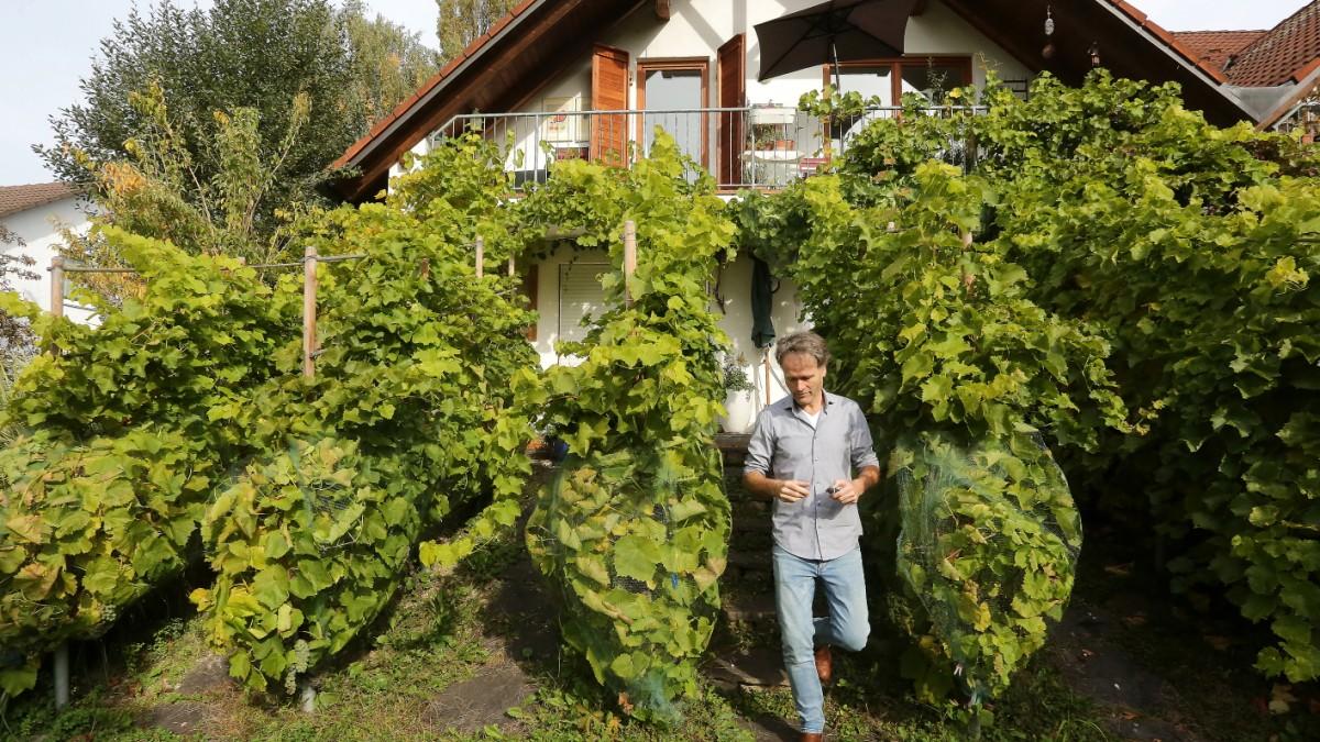 Prächtig Winzer in München: Kann man hier Wein anbauen? - München @WA_57