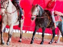 Attacke auf Pony-Karussel