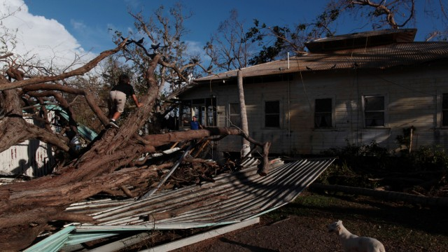 A boy climbs a tree at an area affected by Hurricane Maria in Salinas, Puerto Rico