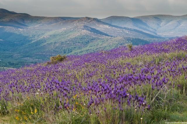 Sierra Norte Madrid