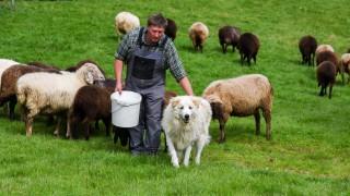 Benediktbeuern Tierhaltung