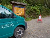 Wölfe im Nationalpark ausgebrochen