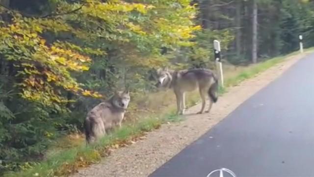 Tiere Bayerischer Wald
