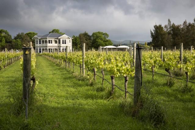 Vineyards of the Cambridge Road Winery Martinborough Wellington region North Island New Zealand