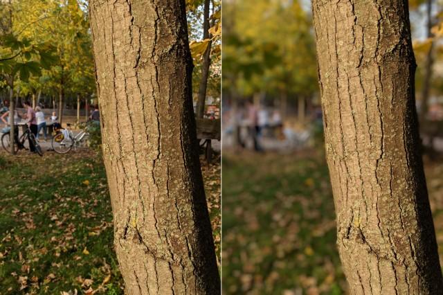 Google Pixel Portrait Baum
