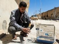 Nach dem Angriff auf Khan Sheikhun im April sammelt ein Mann einen toten Vogel als Beweismittel ein.