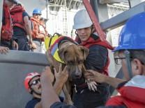 Amerikanische Seglerinnen nach Monaten auf See gerettet