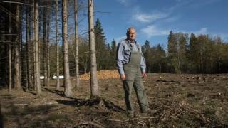 Höhenkirchen, Aschheim, Ottobrunn, Klimawandel und Wald, schwere Schäden durch den Borkenkäfer,