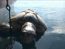 A dead sea turtle is retrieved from the water in Bahia De Jiqulisco, El Salvador