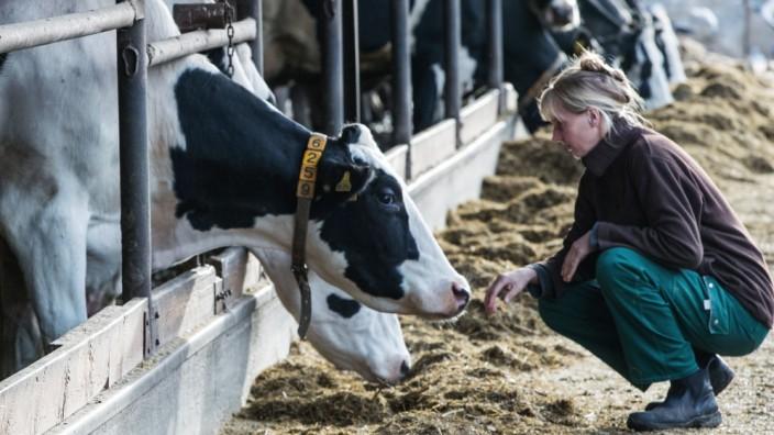 Bauern geben Milchproduktion auf