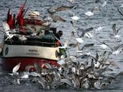 Fischfang Vernichtung