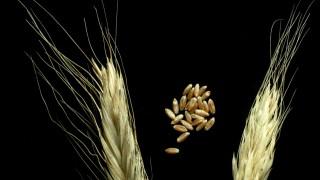 Ernährung Landwirtschaft