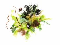 'Algen und Küstengemüse':