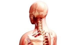Human anatomy artwork Human anatomy computer artwork PUBLICATIONxINxGERxSUIxHUNxONLY PIXOLOGICSTU