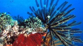 Weltnaturerbe in Gefahr - Great Barrier Reef