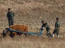 FILE PHOTO: North Korean soldiers plow the land with an ox from the North Korean side of the Yalu River near Sinuiju in North Korea and Dandong