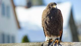 Tiere Taubenvergrämung