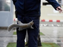 A squirrel is trying to steal a cigarette from Tony Bousell, who is on a break from work, near the Southbank area of London
