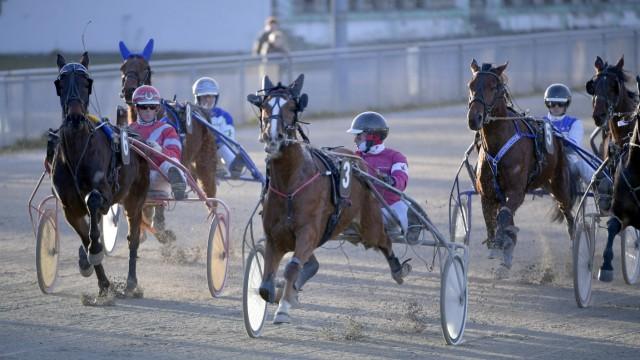 Regionalsport Pferderennsport