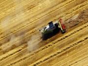 Finanzkrise erreicht Landwirte - Bauern bleiben auf Getreide sitzen, ddp