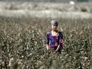 Überfischung Zentralasien Baumwolle