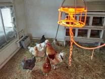 Tierisch kalt Hühnervilla