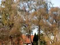 Isenauen-Park Dorfen