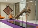 Fossil-Versteigerung für einen guten Zweck (Vorschaubild)