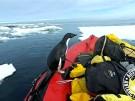 Neugierige Pinguine an Bord! (Vorschaubild)