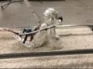 krabbelroboter