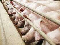 Schweinemastanlage