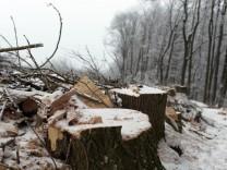 Bruck: Baumfrevel am Engelsberg