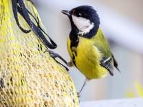 DEU Deutschland Stuttgart 24 10 2017 Vögel sind auf Winterfütterung angewiesen und nicht erst