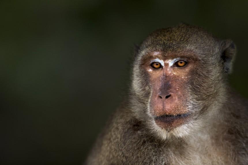 Dieselaffäre Lobbyverein Ließ Affen Abgase Einatmen Wirtschaft