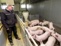 Schweinezucht Martin Kandler Anzing