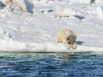 Polar bear resting on the sea ice. SPERRFRIST: 01.02.2018, 20:00 Uhr!