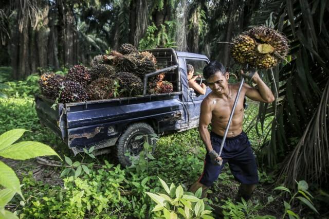 Palm Oil Culture