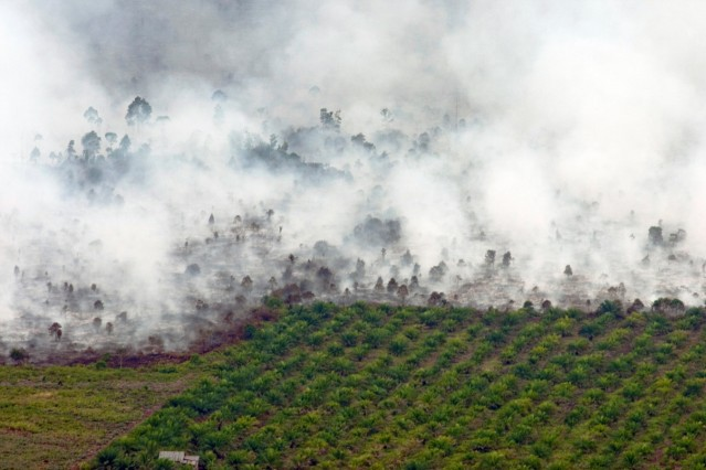 Forest fire as seen near palm oil plantation at Tanah Putih district in Rokan Hilir