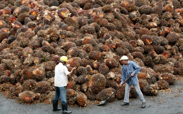 Workers gather oil palm fruits at a factory outside Kuala Lumpur