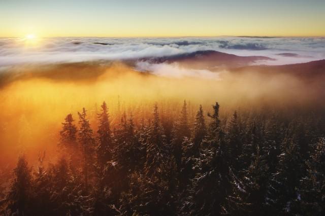 """""""Waldwelten"""" (Buch)"""