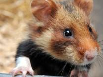 hamster+jetzt