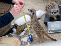 Inventur im Tierpark Hellabrunn