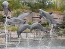 Vorstellung der neuen Delfin-Waage des Nürnberger Tiergartens