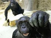 Serie: 200 Jahre Darwin (13), Wie biologisch die Moral ist, ap