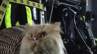 Katze Brand Olching